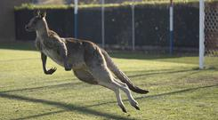 The creature stopped play for 32 minutes (Lawrence Atkin/Capital Football via AP)