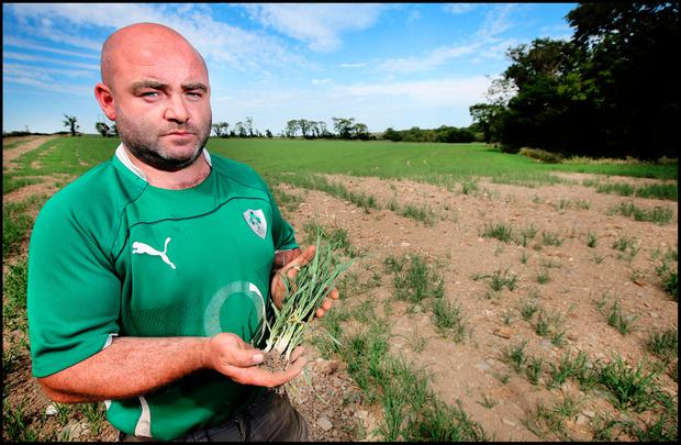 John Murphy with his failed barley. Photo: Steve Humphreys