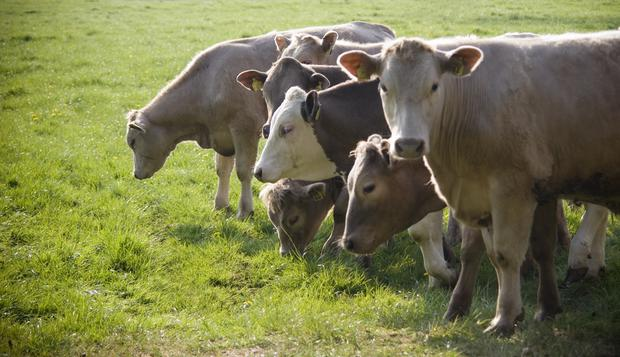 Bullocks are now back to a base of €4.05/kg.