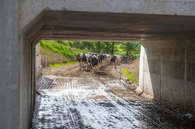 Joe Lucey's underpass on his dairy farm is in Ovens, Co. Cork. Pic Michael Mac Sweeney/Provision