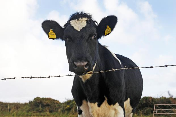 Many of the Irish dairy co-ops have a sustainability programs for their suppliers. But do we know what the true meaning of the word sustainability is?