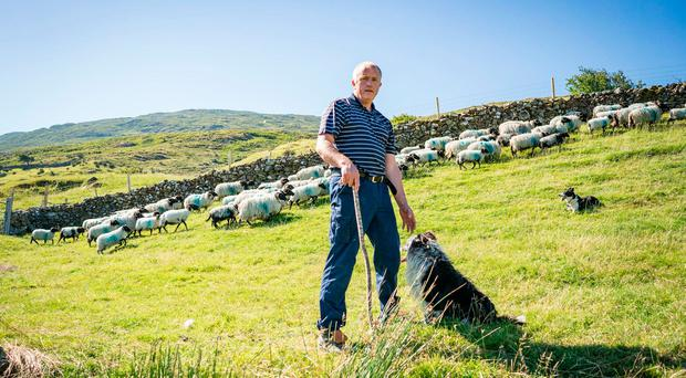 Brendan Joyce on his farm at Maam Cross, Co Galway. He is the 10th generation of his family to farm sheep in Connemara. Photo: Keith Heneghan