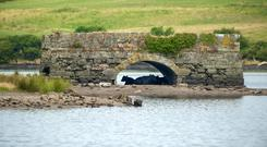 Cattle seeking shelter under an old bridge in Inniscarra. Photo: Mike MacSweeny / Provision