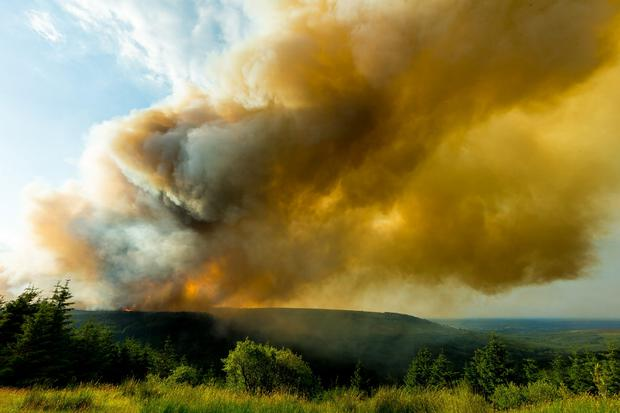 The blaze took off yesterday at around midday
