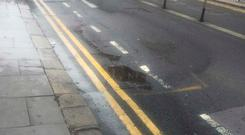The scene of the leak on Kildare Street this morning