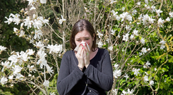 Pollen mixed with pollution is exacerbating hay fever symptoms for many sufferers. Photo: Deposit photos