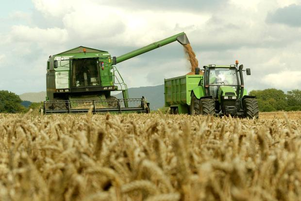 Tom Ryan & Rory Houlhan are pictured harvesting a crop of Ambrosia winter wheat at Ballymackee, Co Waterford for Tony O'Reilly, Grange, Clonmel, Co Tipperary. The crop yielded 3.8t per acre at 21pc moisture & bushelled 70kph. Photo: O'Gorman Photography