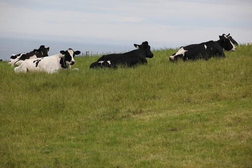 ICMSA dairy chairperson Ger Quain said it was time for processors to lift prices in accordance with market developments and the pressure on their farmer-suppliers.