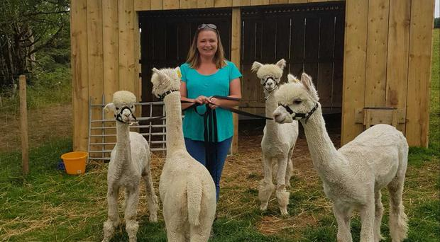 Ruth Newton with four of the farm's alpacas, named after Peaky Blinders characters- (L-R) Little John, Alfie, Tommy and Arthur