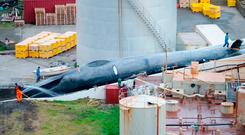 The slaughter of this whale has caused outrage