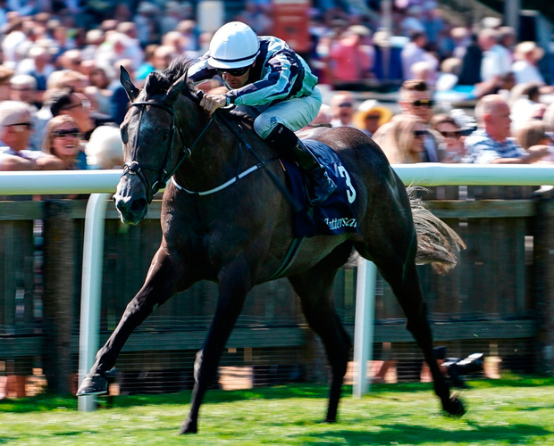 Jessica Harrington's superstar filly Alpha Centauri set for a mouth-watering duel in the Prix Jacques le Marois at Deauville. Photo: Alan Crowhurst/Getty Images