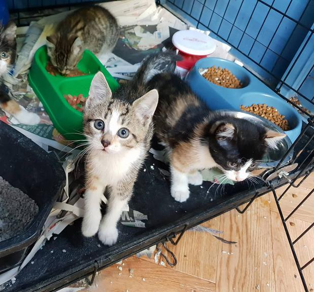 The family of cats, including six kittens, were discovered in a lane way in Donegal on Saturday