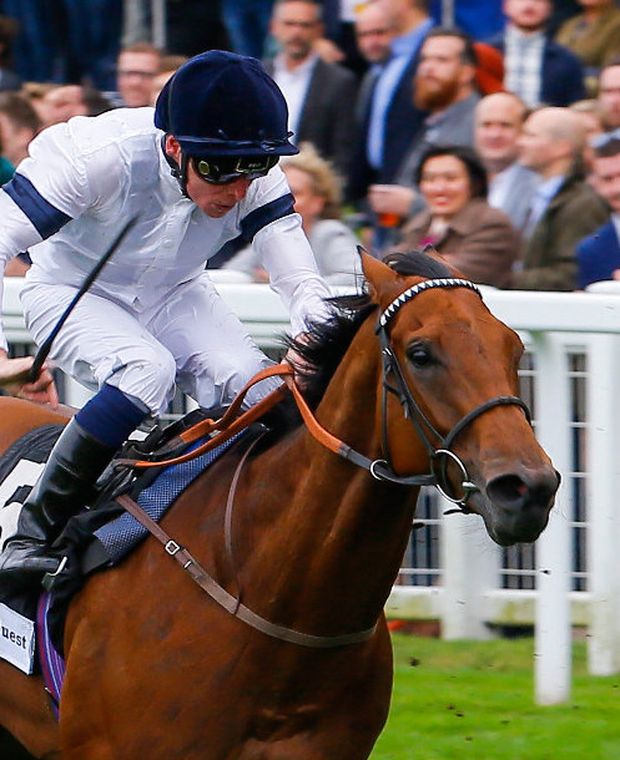 Exceeding expectations: Projection has had useful bits of form this year. Pics: racingpost.com