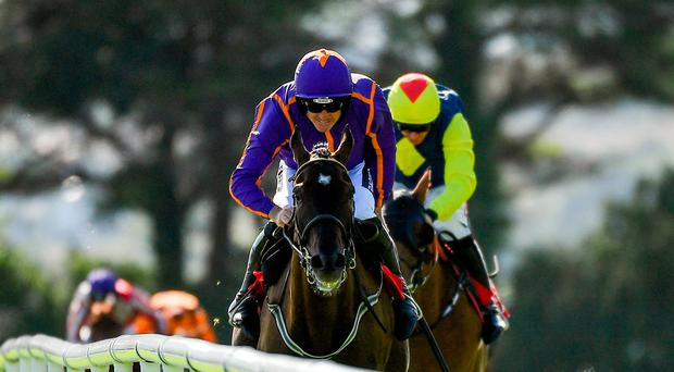 Patrick Mullins: Great to have Ruby back and he should cash in again on strong Exchange Rate