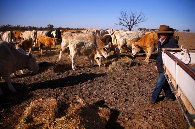 Farmer May McKeown feeds the remaining cattle on her drought-effected property, located on the outskirts of the north-western New South Wales town of Walgett, in Australia, July 20, 2018. REUTERS/David Gray