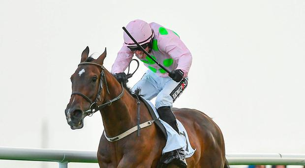 Galway Plate Day: A race-by-race guide, top tips from our expert team and our lay of the day
