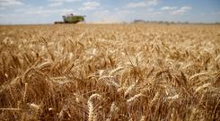 FILE PHOTO: A French farmer harvests wheat in Sancourt, northern France, July 17, 2018. REUTERS/Pascal Rossignol/File Photo