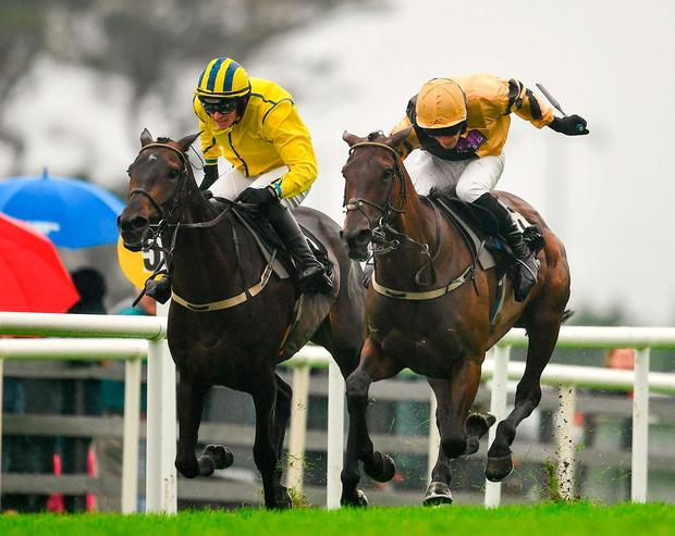 Calie Du Mesnil, ridden by David Mullins (right), on the way to winning the novice hurdle. Photo by Seb Daly/Sportsfile