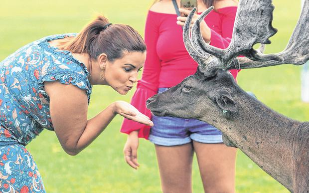 Josi Amorin blows a kiss to a deer in the Phoenix Park, Dublin, yesterday. Photo: Gareth Chaney