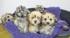 Some of the dogs rescued from a puppy farm in Co Roscommon. A total of 86 dogs, including 23 puppies, were found at the site