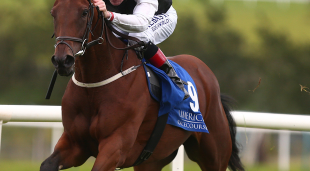 Making Light is Declan's mount in the Platinum Stakes at Cork