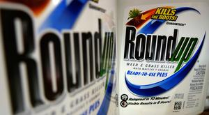 Bottles of Roundup herbicide, a product of Monsanto (AP Photo/Jeff Roberson, File)
