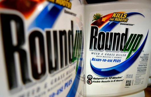 DAMAGES: Monsanto has lost a court case in the US based on whether or not Roundup caused a groundskeeper's cancer. Photo: AP