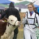 Pictured at The Tullamore Show was Amy Edgewoods, Wiltshire, England with her Hereford in The Young Handler Competition, which she won. PIC COLIN ORIORDAN