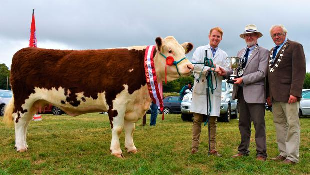 David Sheehan (ISA) and IHBS president Martin Murphy presents the Murphy Cup to Edward Dudley for his Hereford Champion 'Kilsunn Lass Lily' at North Tipperary Show at Nenagh