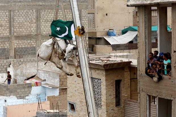 Residents watch as a sacrificial cow is lowered from a rooftop by crane, ahead of the Eid al-Adha festival in Karachi, Pakistan, August 12, 2018. REUTERS/Akhtar Soomro/File Photo