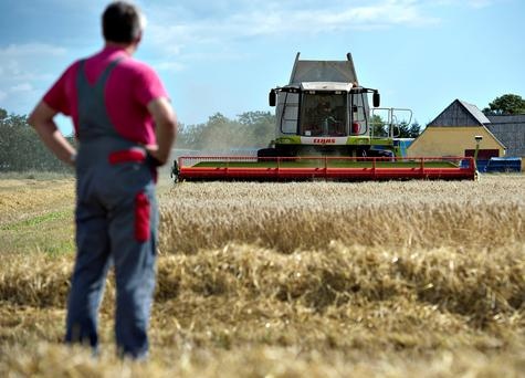 A farmer watches as grain is harvested. REUTERS/Henning Bagger/Scanpix/File Photo