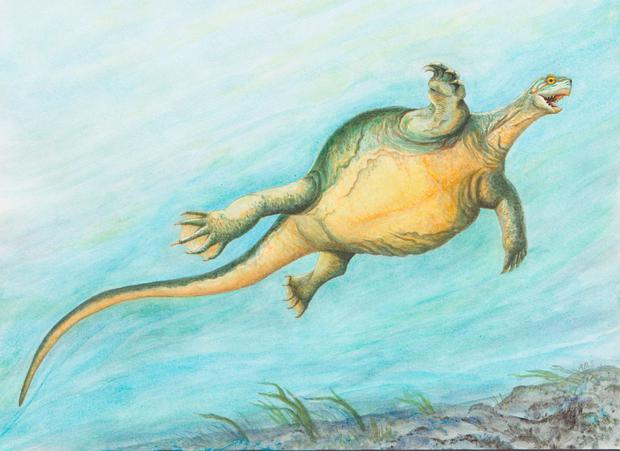 An artist's impression of the new species of turtle. Photo: PA