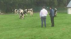 Castletroy College welcomed back 1,220 students and around 30 cows.