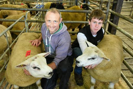 Malachy McMeel and his assistant Conor Coyle with his Texel rams at the Sheep Ireland Elite Sale.