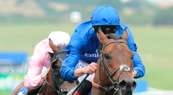 Clive Cox's stable star Harry Angel and jockey Adam Kirby can repeat last year's success in Haydock's big sprint