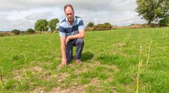 Peter Hurley shows his land which has sufferred from drought in August. Pic Michael Mac Sweeney/Provision