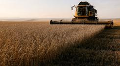 A combine harvests wheat in a field of the Solgonskoye private farm outside the Siberian village of Talniki in Krasnoyarsk region, Russia September 7, 2018. Picture taken September 7, 2018. REUTERS/Ilya Naymushin/File Photo