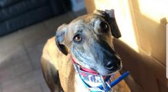 Raul is still looking for a new home. Photo: Cara Rescue Dogs