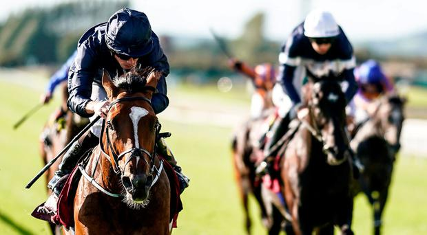 'Flag' flies for O'Brien but 'Scatter' steals show