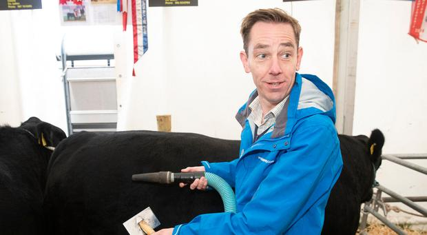 Ryan Tubridy pictured vacuuming a Aberdeen Angus Bull on the first day of The National Ploughing Championships 2018. Picture: Kinlan Photography.