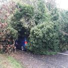A tree down on the Kilbeggan to Clara Road in Co Offaly