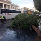 A tree down on O'Connell Street (Photo: Independent.ie)