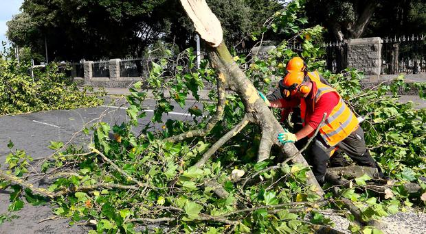 Chaos: Council workers tackle a fallen tree on the Finglas Road near Glasnevin Cemetery in Dublin. Photo: Frank McGrath