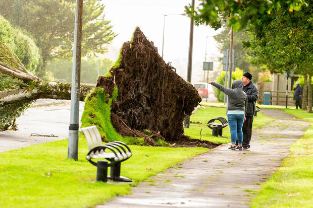 A tree is uprooted in Maugheraboy Estate in Sligo. Photo: James Connolly