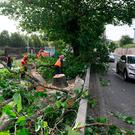 Workmen deal with a fallen tree on Finglass Road by Glasnevin Cemetary, Dublin as Storm Ali has made itself felt across the country. Photo: Brian Lawless/PA Wire