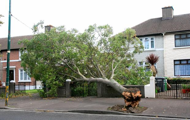 A large tree was brought down in Crumlin.