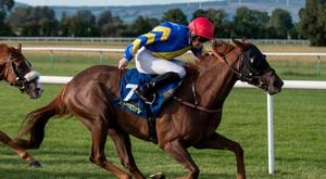 YOU NAME IT: Cracking Name is fancied at Naas this afternoon. Photo: racingpost.com