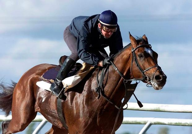 Thoroughbred: Michael Kinane rides Galileo back in 2001 shortly before the stallion was sent to stud. PA Photo