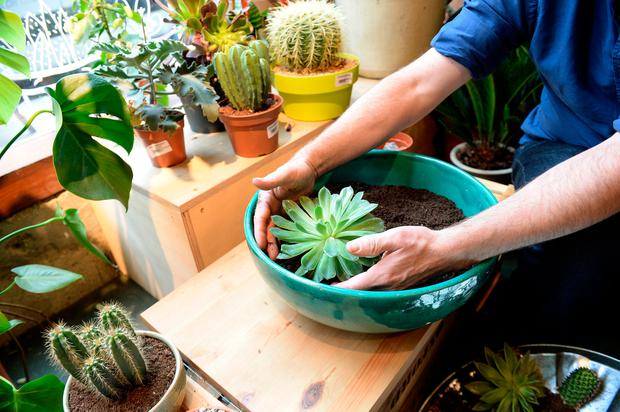 Diarmuid Gavin S Step By Step Guide To Making Your Own Cacti Garden