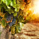 Bright forecast: Argentina's climate is ideal for vineyards